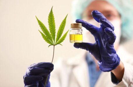 Cannabis medicinal: el Gobierno autorizó el autocultivo y venta de aceites en farmacias