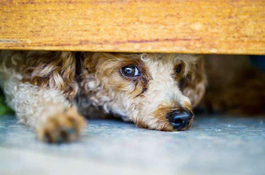 Pirotecnia: La pesadilla de nuestras mascotas
